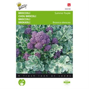 Buzzy® Broccoli Summer Purple