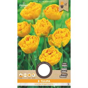 Tulp Yellow Pomponette  11/12  8 St. (15) 970.04