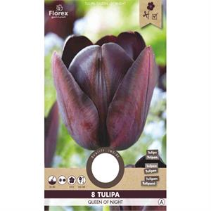 Tulp Cottage Queen Of Night  12+  8 St. (15) 970.37